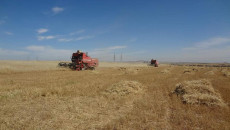 افتتاح ساحة جديدة لاستلام الحنطة والشعير في سهل نينوى