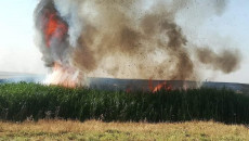 Thousands of donums of grain crops burned in Kirkuk and Nineveh