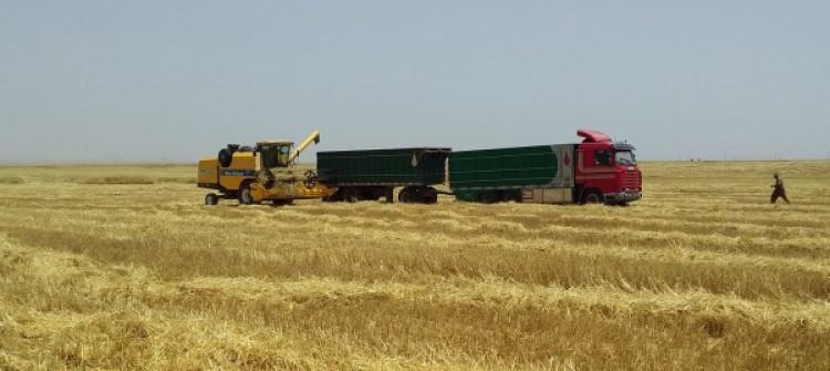 Şingal'daki 120 çiftçinin eserleri yok oldu