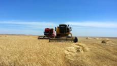 500 bin buğday ve arpa ürünlerinden<br>çiftçilerden sadece 70 bin ton alındı