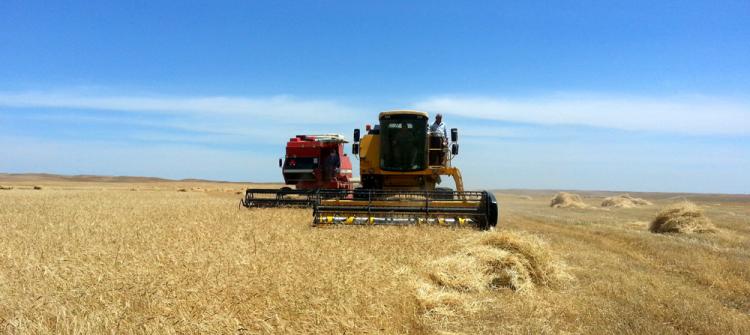 Kirkuk local administration resumes purchasing grains of farmers