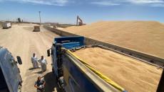 كركوك.. البدء باستلام الحنطة التي تحتوي على العدس