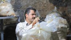 Duhok'ta mağarada mantar yetiştiriyor