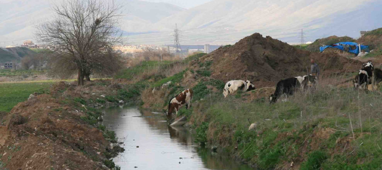 Two booby-trapped cows explode in Jalawla