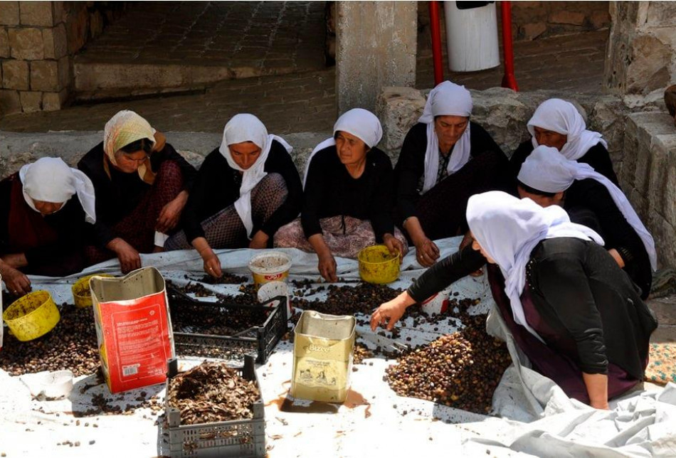 Harvesting olives and producing oil olive from it has became a part of thier annual traditional and cultural events