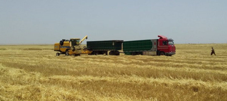 Iraq's agriculture capacity reduced by 40% due to IS war legacy