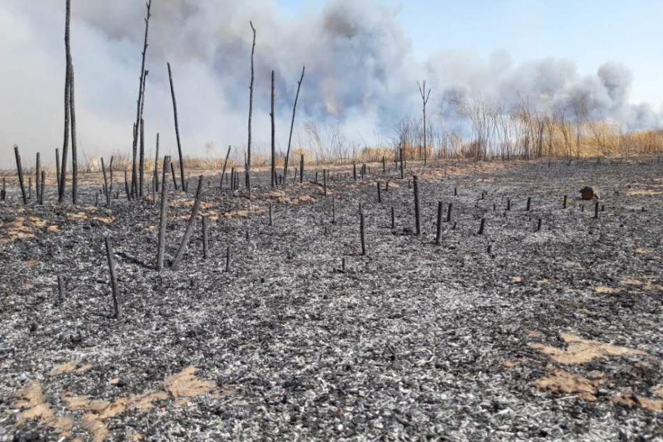 Crop field fires reach mass graves in Shingal's Kojo village
